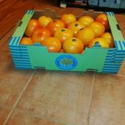 Продаем грейпфрут из Испании